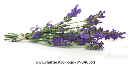 lavender isolated on the white - stock photo
