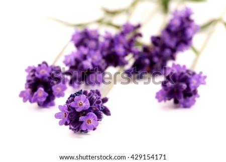 Lavender. Lavender - Bunch of lavender flowers on a white background. Lavender herbs. Lavender flowers. Lavender on white. Lavender herb. Aromatic lavender. Blue lavender. - stock photo