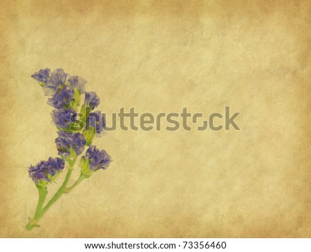 lavender on paper background - stock photo