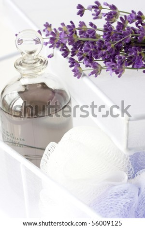 lavender plant and oil in white box - stock photo
