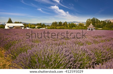 lavender valley oregon
