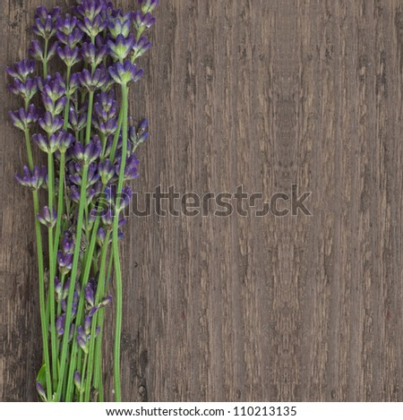 lavender with space for the text - stock photo