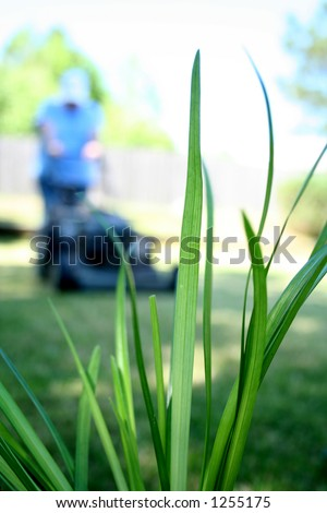 Lawn Garden Grass Mowing - stock photo