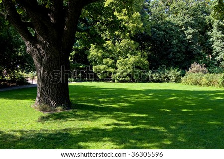 Lawn in a botanical garden in Moscow with an old tree - stock photo