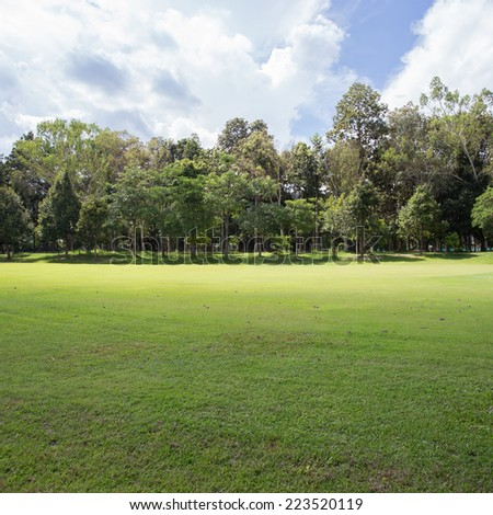 lawn of golf course, green grass field in the park