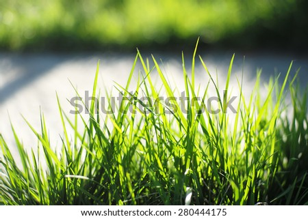 Lawn of lush bright fresh green grass closeup on natural background copyspace, horizontal picture - stock photo
