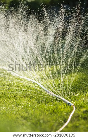 Lawn sprinkler spaying water over green grass. Irrigation system. Micro spray tape. backlight, shallow depth of field - stock photo
