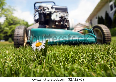 Lawnmower about to mow over a daisy - stock photo
