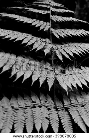 Layered ferns, vertical, black and white - stock photo