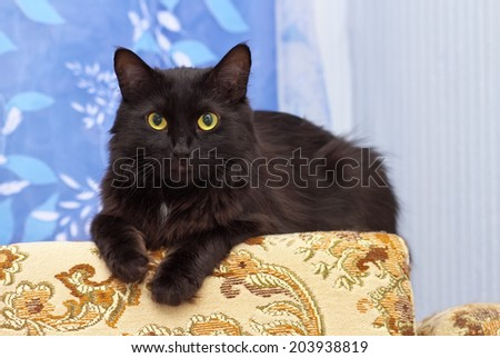 Lazy black cat laying on the sofa - stock photo