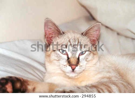Lazy cat in-charge - stock photo