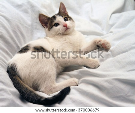 Lazy Cat on the Bed. - stock photo