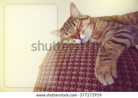 Lazy cat on the couch with copy space - stock photo