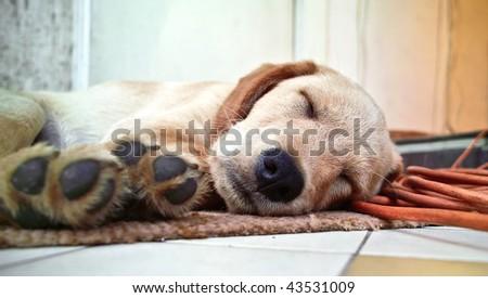 Lazy dog - stock photo