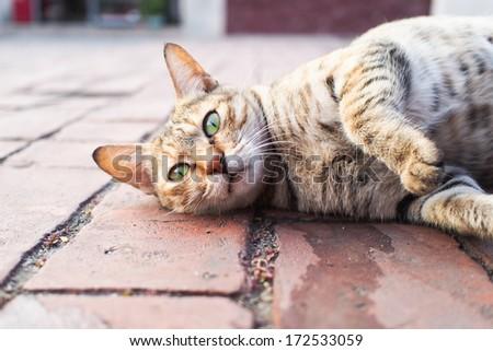 lazy kitty - stock photo
