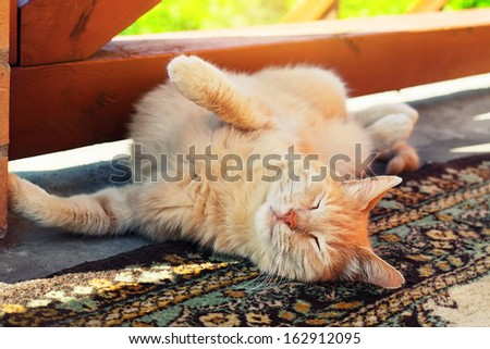 Lazy red cat stretches on carpet at outdoor, paws up - stock photo