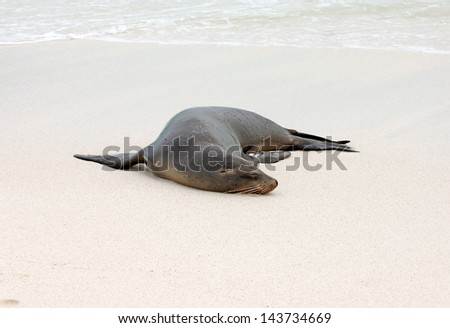 Lazy Sea Lion on Beach - stock photo