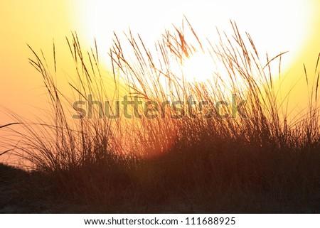 Lazy sunset - stock photo