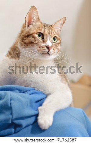 Leadership, cat on man's shoulder with confident expression. - stock photo