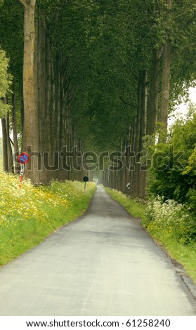Leading path into a beautiful forest. Useful file for your brochure, flyer and site about nature, forest conservation and travel. - stock photo