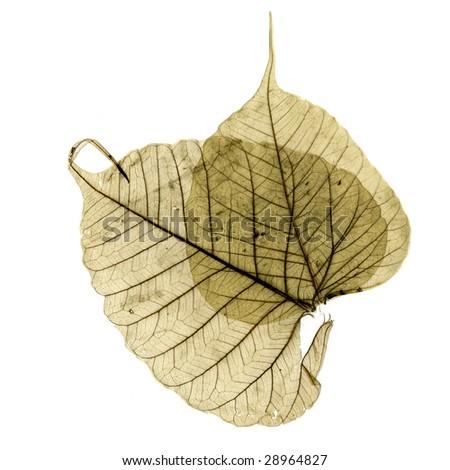 leaf - stock photo