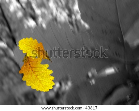 Leaf Abstract - stock photo