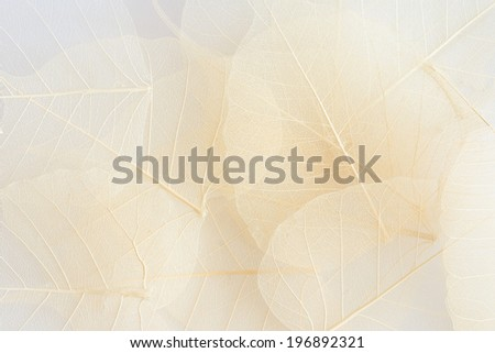 leaf abstract background - stock photo