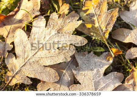 Leaf and rime