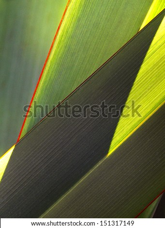 Leaf and Shadow abstract - stock photo