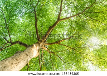 leaf and tree isolated on white background - stock photo