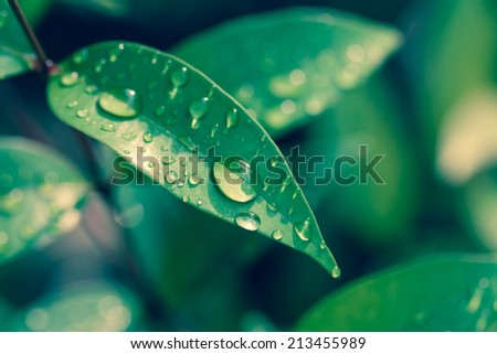 leaf and water drops on it background - stock photo
