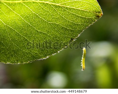 leaf and worm