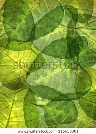leaf background green color - stock photo