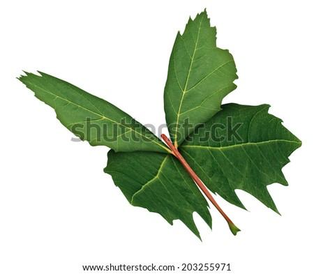 Leaf Butterfly  as a symbol of nature hope and growth with a three quarter view of a green leaf shaped as the open wings of a flying butterfly as a freedom metaphor for learning discovery. - stock photo