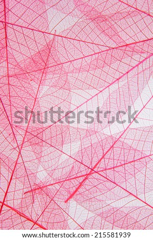 Leaf cell structure - macro natural texture