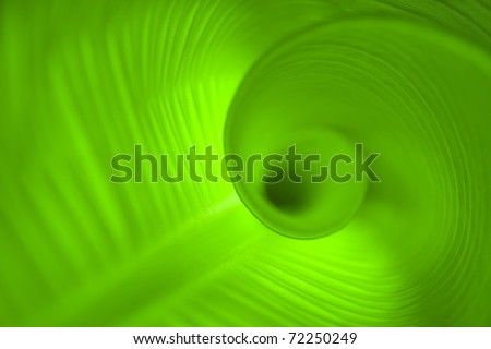 leaf close up in spiral shape - stock photo