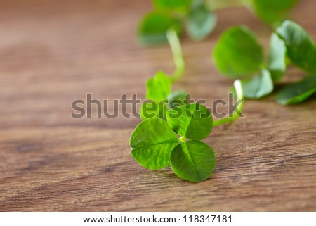 leaf clover on wood background