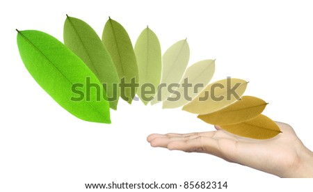 Leaf color and hand on white background. - stock photo