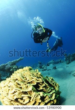 leaf coral and scuba diver - stock photo