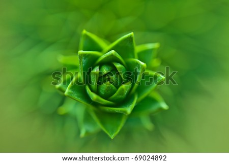 Leaf detail - stock photo