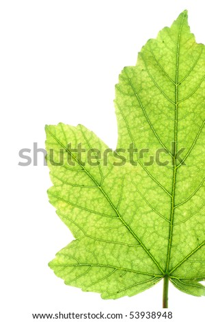Leaf detail - macro photography
