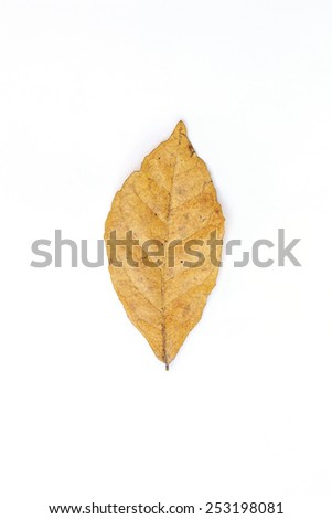 Leaf dry on white background - stock photo