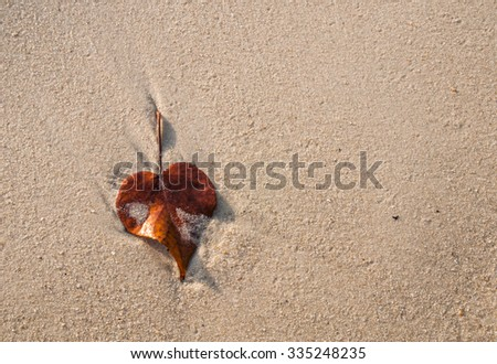 Leaf Fall on Beach