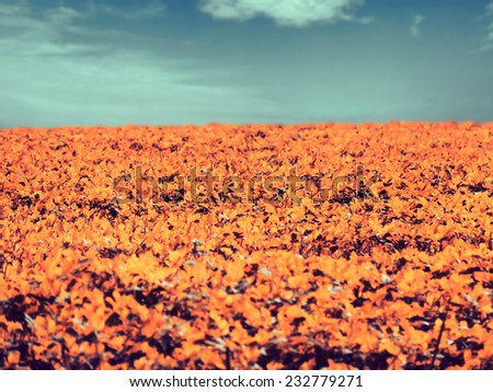 Leaf field, infrared effect, selective focus - stock photo