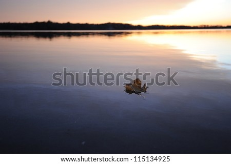 Leaf floating in lake with sunset - stock photo