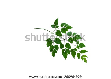 leaf form and texture - stock photo