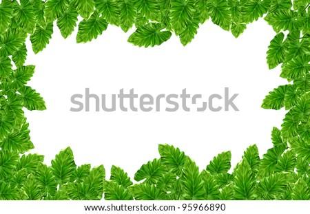 Leaf frame.Giant Taro plant leaves also known as:Alocasia machrorhiza,Dieffenbachia (Dumb Cane), Elephant Ear, Cunjevoi isolated on white background - stock photo