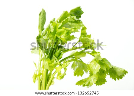 leaf fresh celery isolated on white background - stock photo