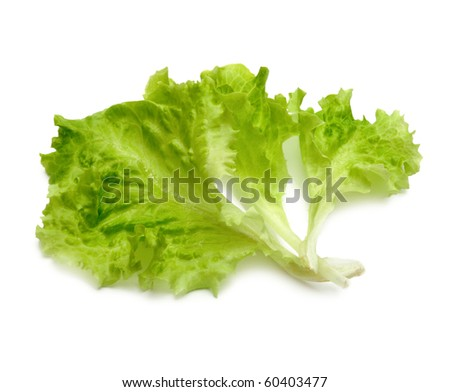 leaf fresh lettuce on white