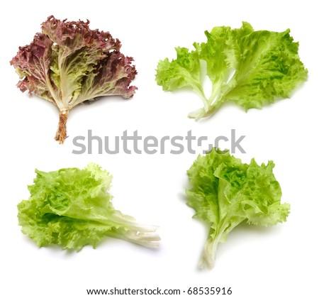 leaf fresh lettuce on white - stock photo